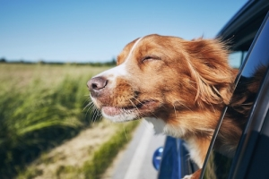 Urlaub mit Hund Wingst   Lytte Hytte   Ferienhaus Wingst